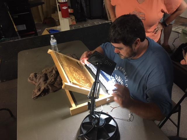 Bee School Grafting